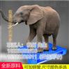 厂家直销网格1210田字型塑胶托盘抗击全新料